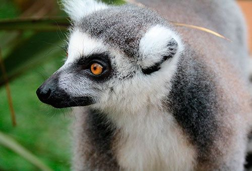 Viaje Expedición Madagascar