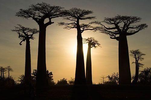 Viaje por Madagascar Expedición Baobabs