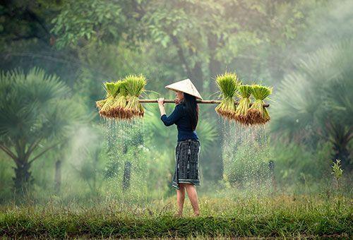 Viaje Vietnam Panorama - Sapa