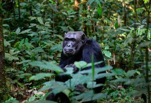 Viaje Uganda - Aventura en Uganda