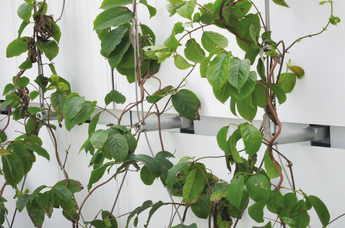 Green wall solutions