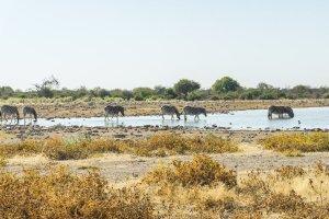 Gluten Free Namibia 3