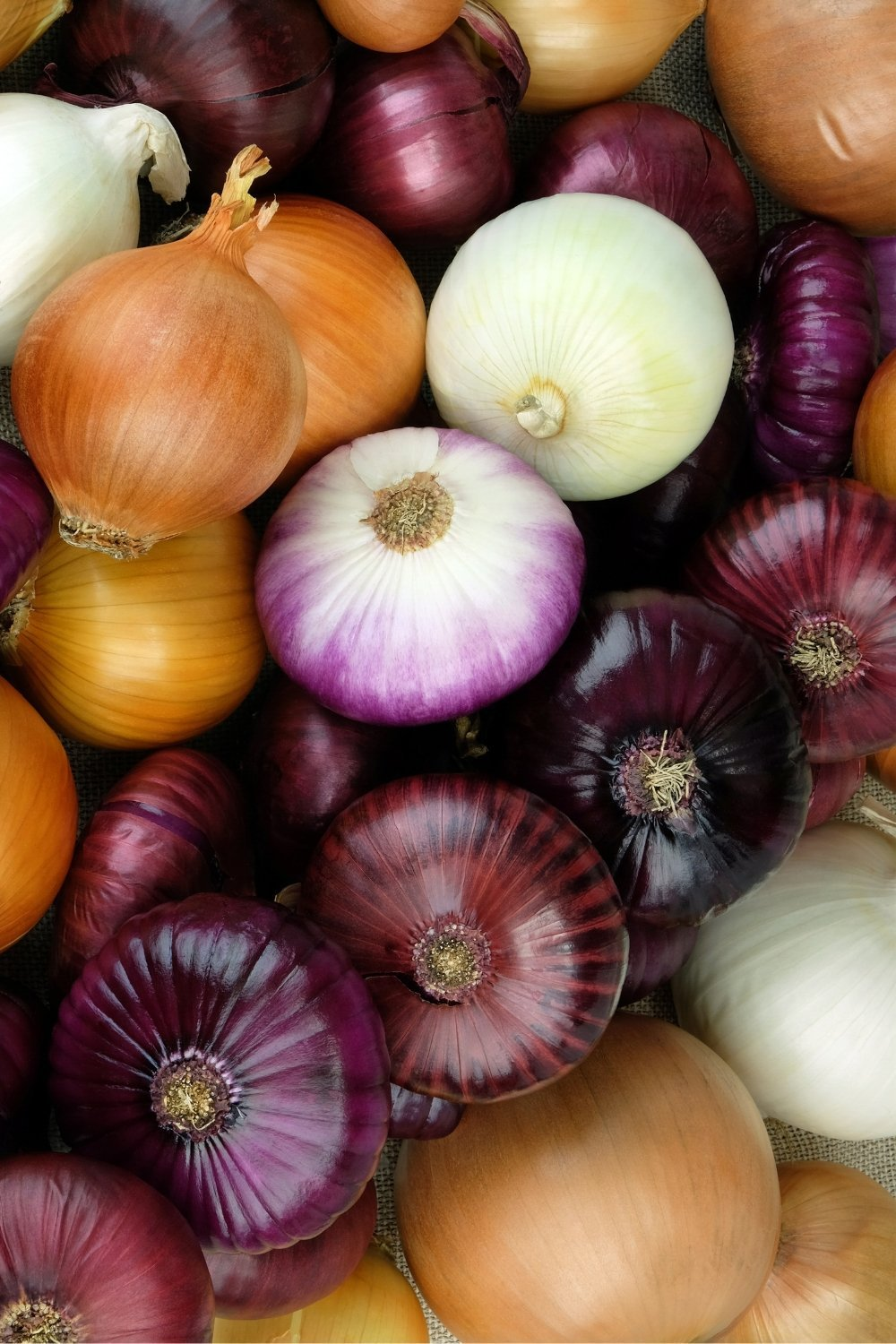 Many onion varieties