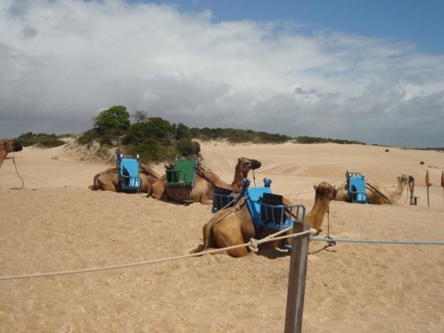 o que fazer em natal dunas