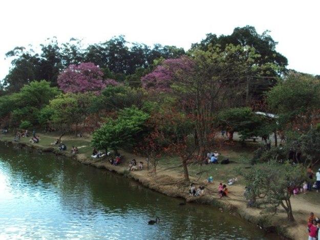 o que fazer no parque ibirapuera lago