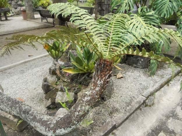 o que fazer no jardim botanico sp xaxim