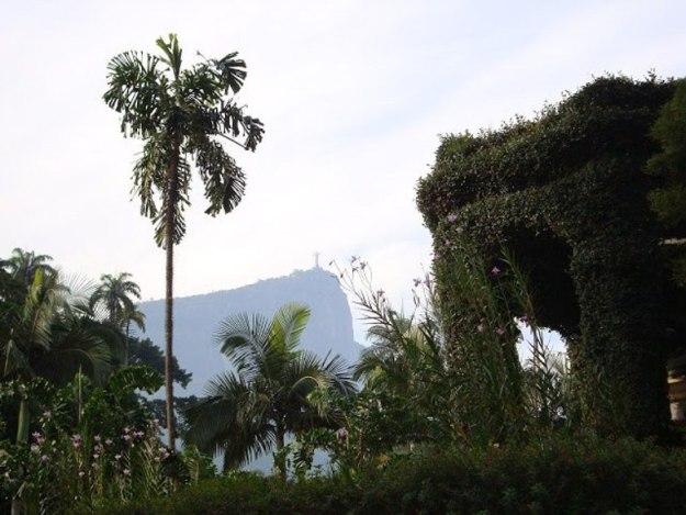 o que fazer no rio de janeiro jardim botanico tour