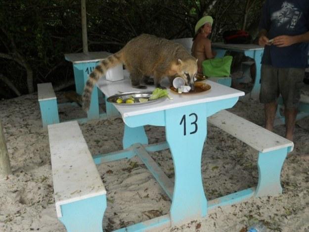 ilha do campeche como ir quati