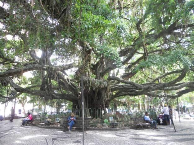o que fazer no centro de florianopolis figueira centenaria