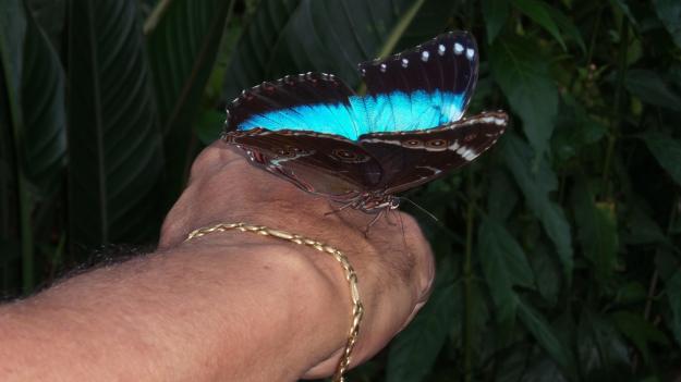 Borboleta vem na mão do visitante no Parque das Aves. Foto: Marcelle Ribeiro