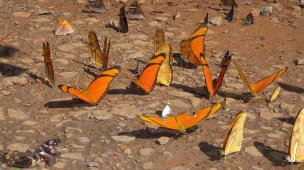 cataratas da argentina borboleta