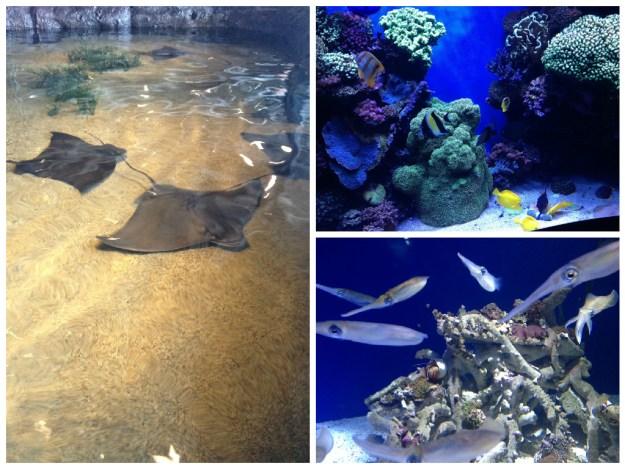Monterey Bay Aquarium. Foto: Marcelle Ribeiro