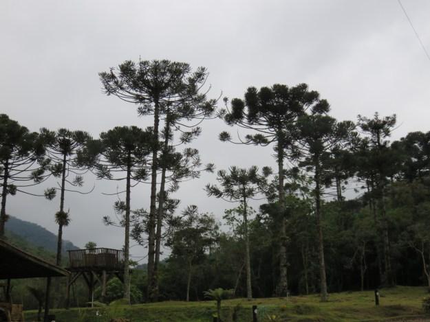 Estação Ecológica de Bananal. Foto: Marcelle Ribeiro