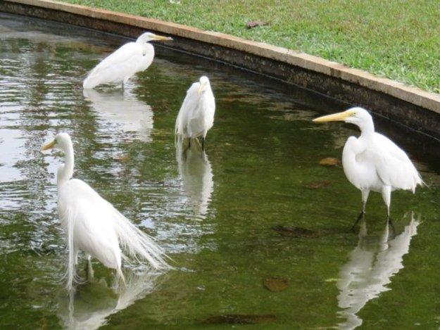 o que fazer em belem do para parque aves