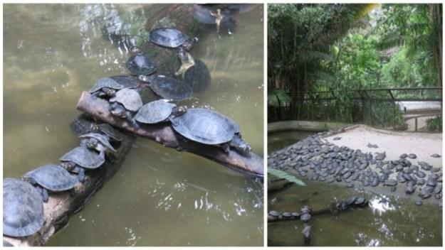 o que fazer em belem do para tartaruga