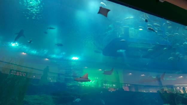 Um test drive do aquário do Dubai Mall. Para ver tudo, é preciso comprar ingresso. Foto: Marcelle Ribeiro