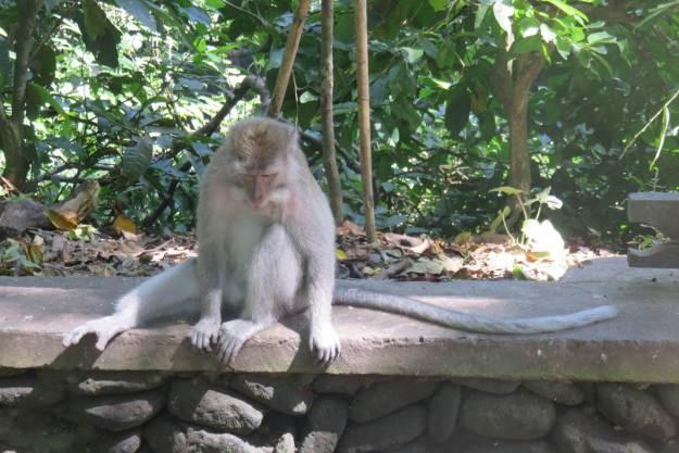 Floresta dos Macacos, em Ubud, Bali. Foto: Marcelle Ribeiro.