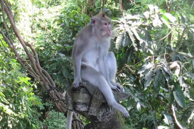 Esse macaco adulto descansa em cima de uma escultura. Foto: Marcelle Ribeiro