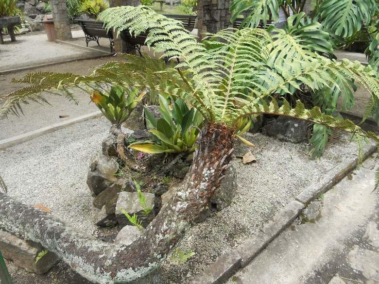 o que fazer em sp jardim botanico xaxim