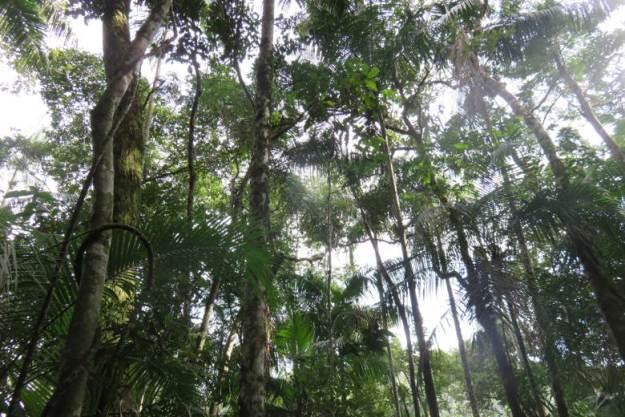 Parque Nacional de Itatiaia o que fazer