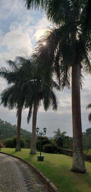 palmeiras fazenda cachoeira grande
