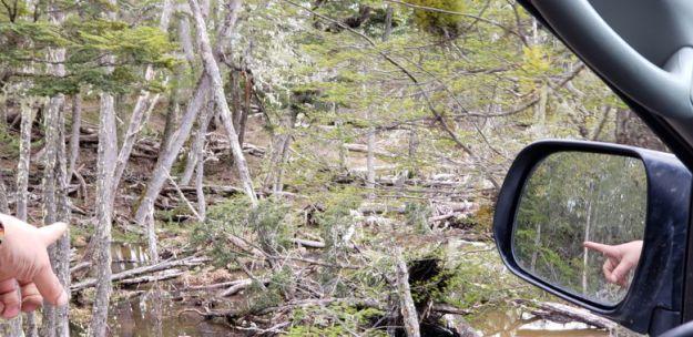 expedicao 4x4 ushuaia estrago castores