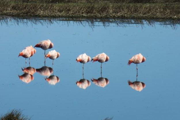 flamingo o que fazer em el calafate