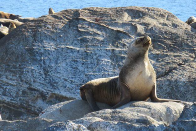 lobo marinho como ir para ushuaia
