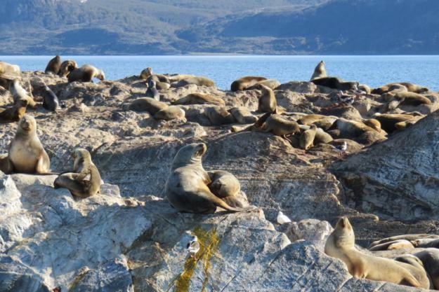 leoes marinhos quanto custa viajar para ushuaia