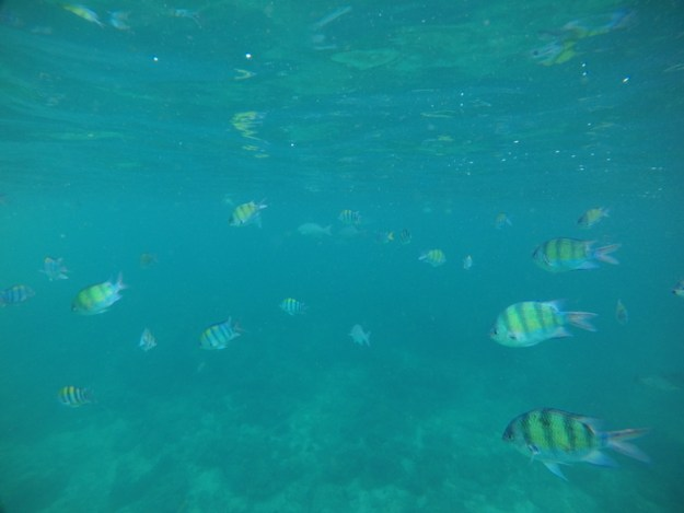 phi phi island snorkel