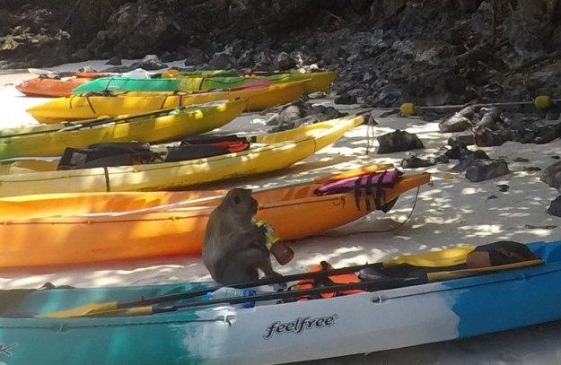 macaco praia caiaque seguro viagem tailândia