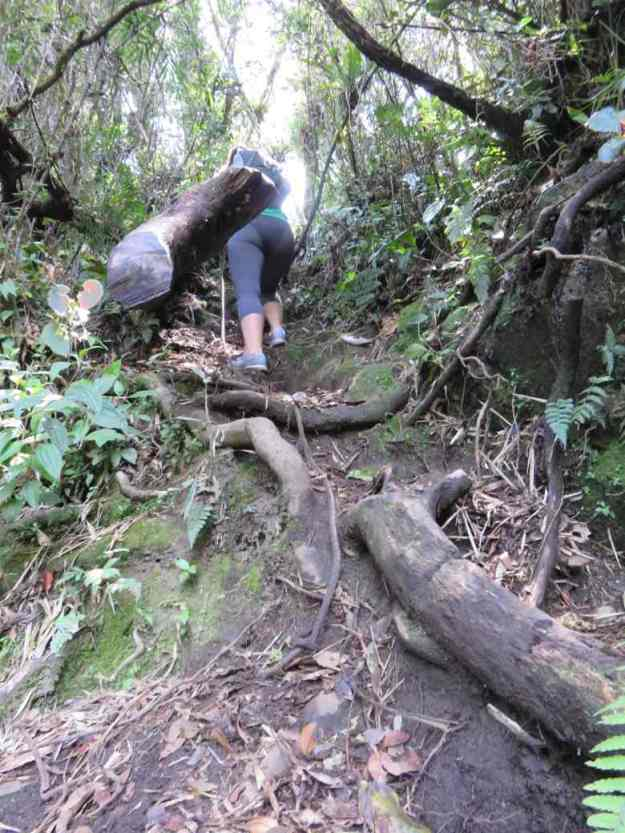 o que fazer em bananal cachoeira bracui trilha