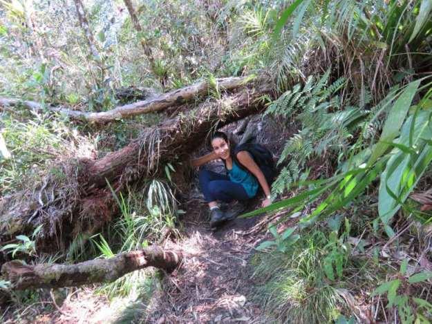 o que fazer em bananal trilha cachoeira bracui