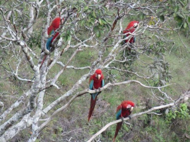 chapada dos guimarães onde ficar araras vermelhas