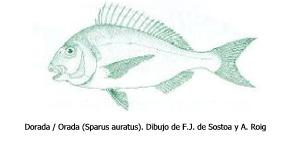 doradaa