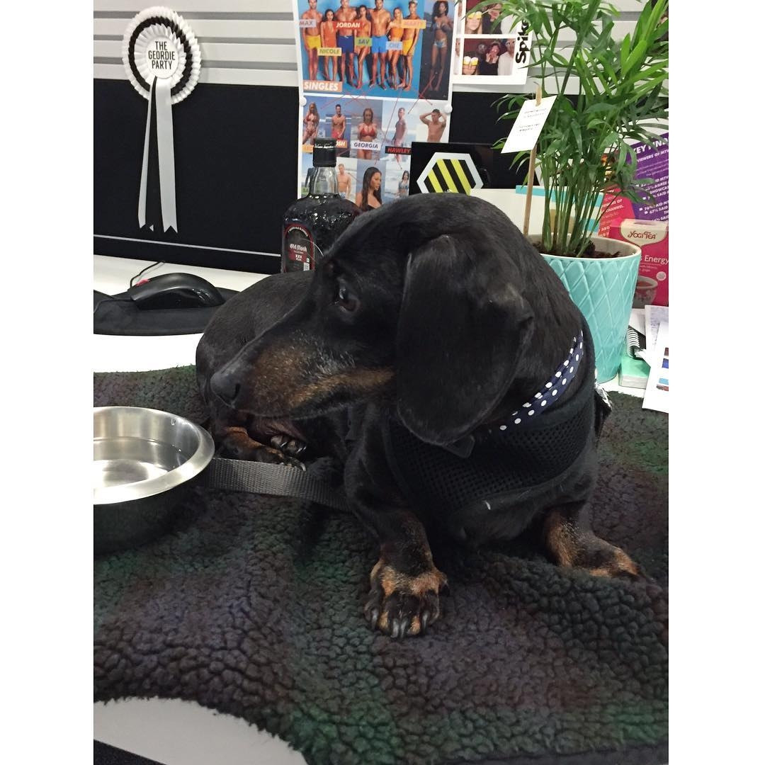Today was bringyourdogtoworkday mtvuk!  After a brief spell ofhellip