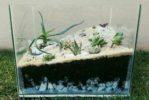 DIY succulent terrarium 6