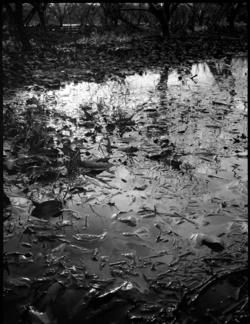 People and nature with Fuji GA645 and Rollei_RPX pushed to 800