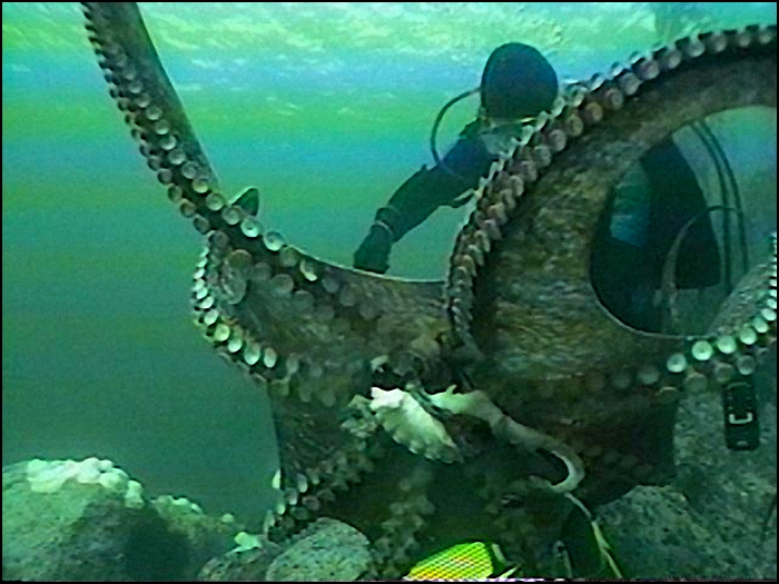 A still from a videotape of Tom Hlavac harvesting a Pacific Giant Octopus