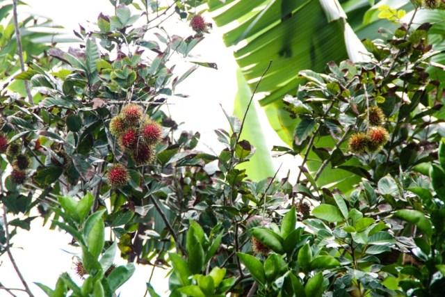 VCT - Fruit Orchard - James Pham-17