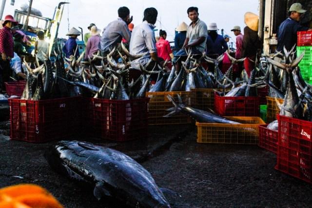 Victoria Phan Thiet - Phan Thiet Fish Market - James Pham-34