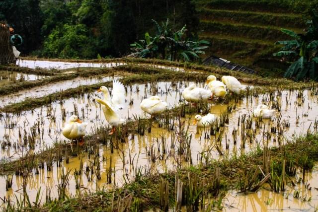 Sapa - Muong Hoa Valley - Image by James Pham-33