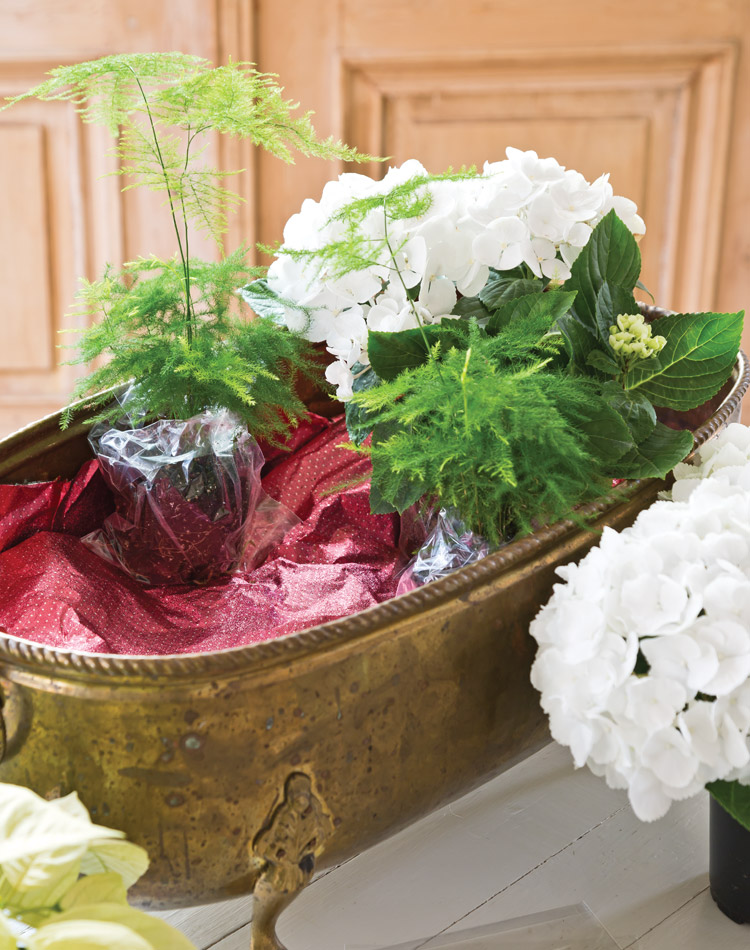 Holiday Blooms: Create a Living Centerpiece