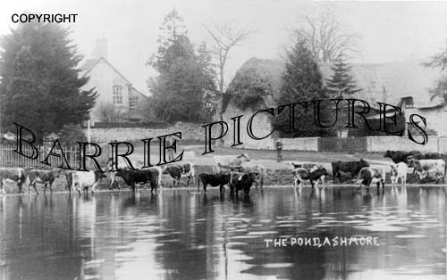 Ashmore, The Pond c1900