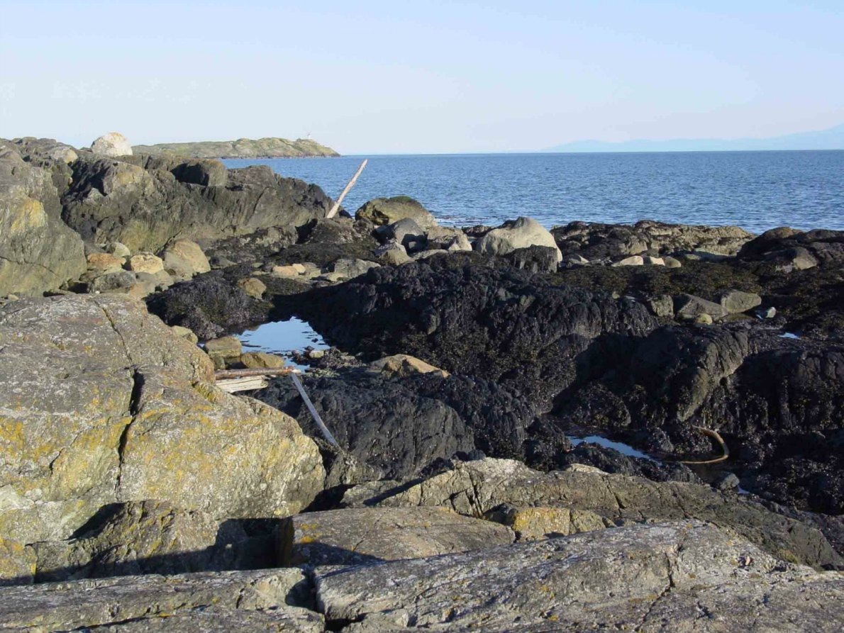 The fault line where two ancient continents collided can be seen along the shoreline at Harling Point.
