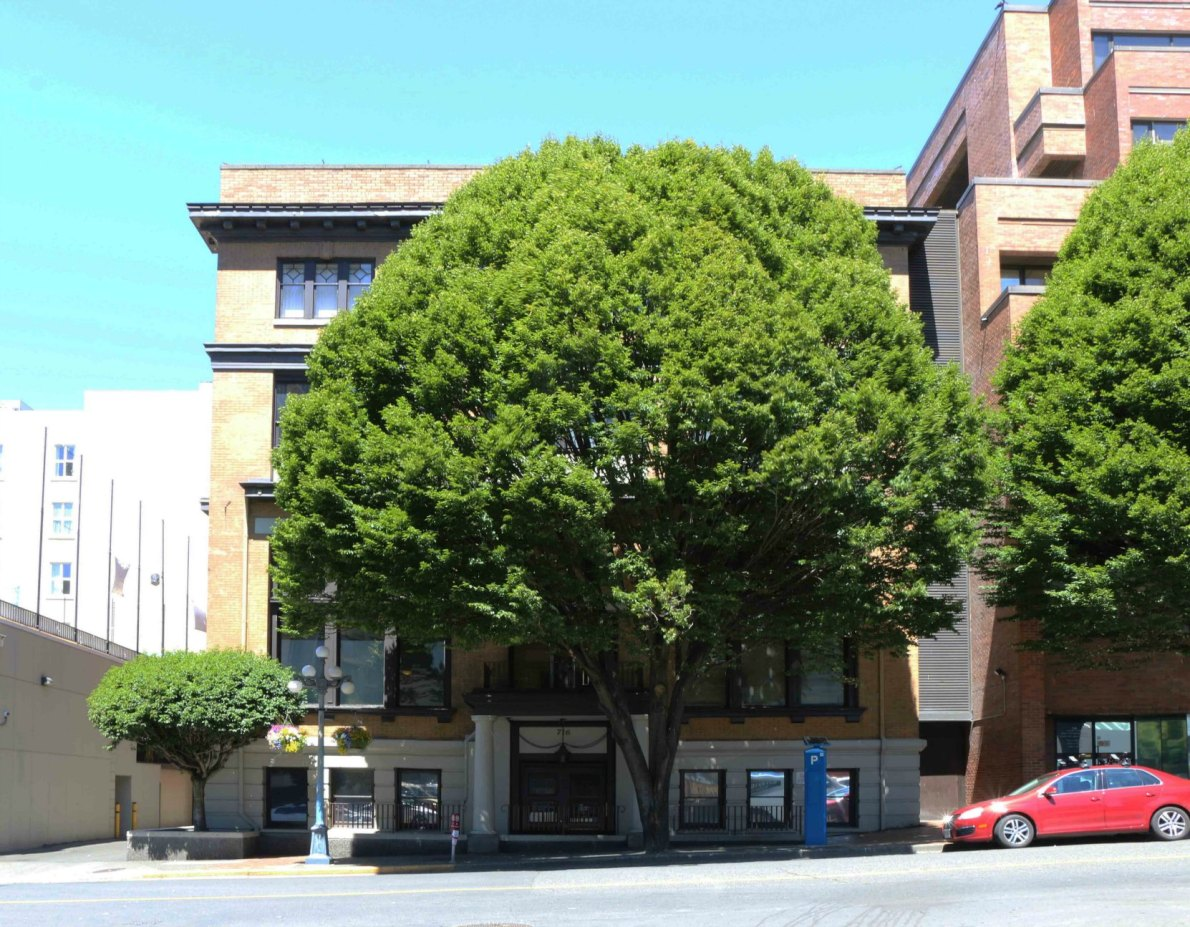 The former Alexandra Club building at 716 Courtney Street (photo by Victoria Online Sightseeing Tours)