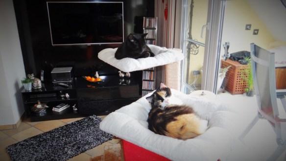 Kiki und Arni