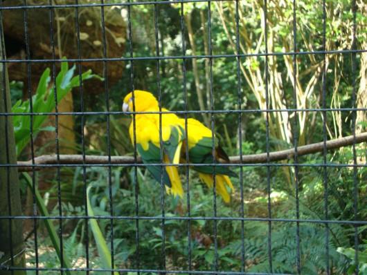 Show de cores - Parque das Aves