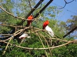 Preservação da natureza - Parque das Aves
