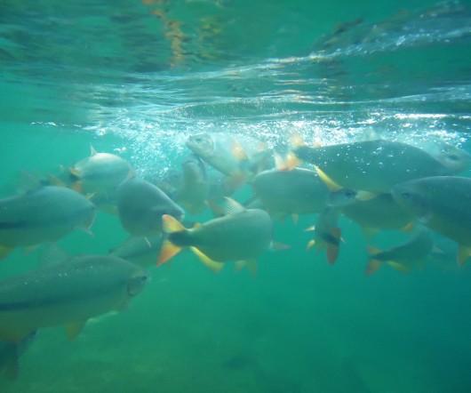 Peixes - Balneário Municipal